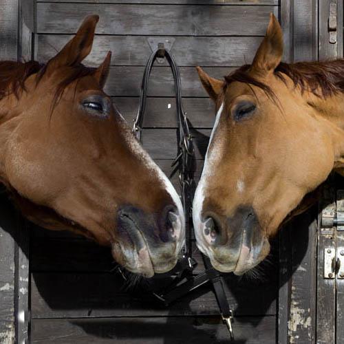 Horse coaching Marrakech Maroc
