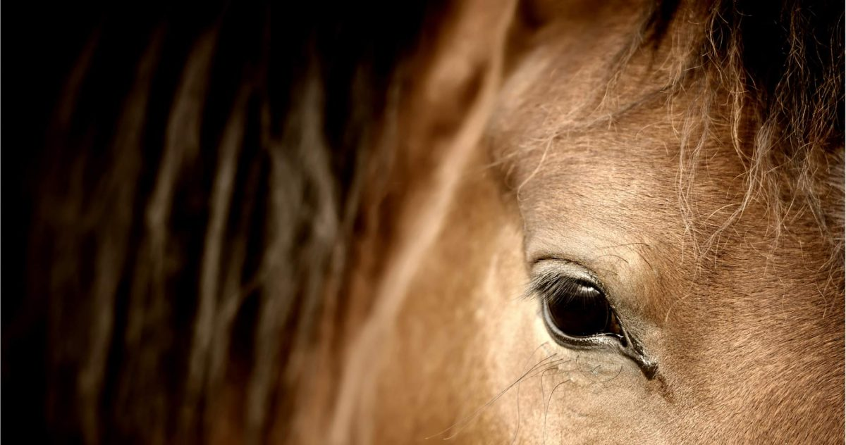 Le Coaching par le cheval, Horse Coaching, Horse Connect