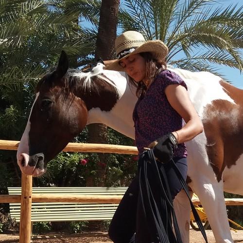 Comportementaliste équin, horse coaching